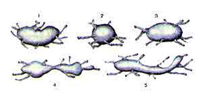 Лимфатические узлы различной формы