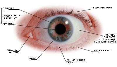 Картинки с глазом человека